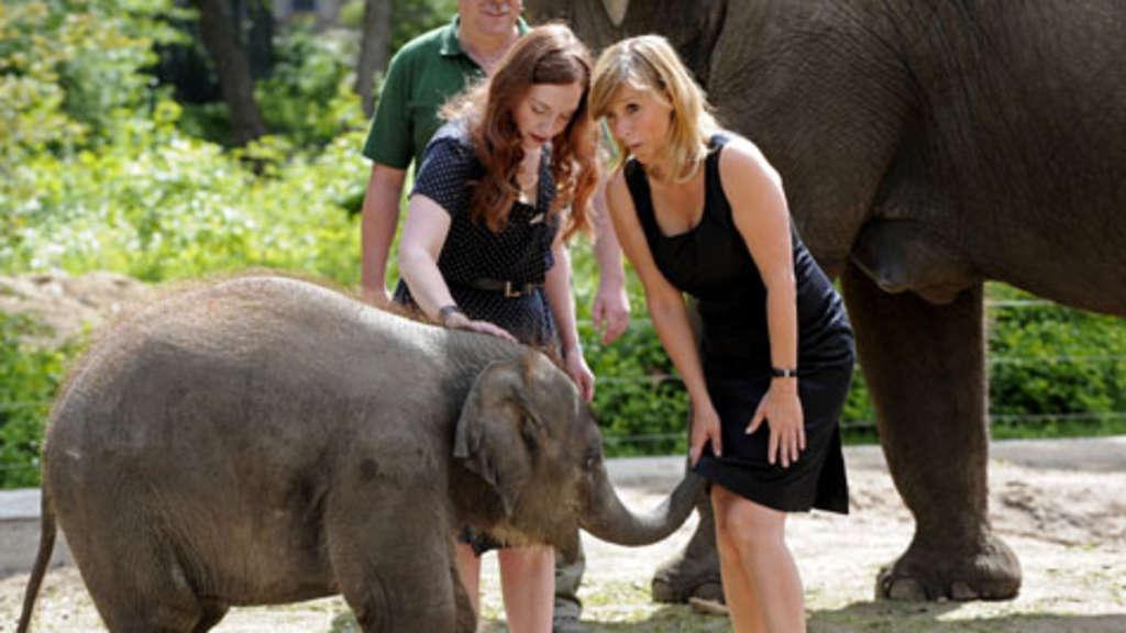 Hier schiebt ein Elefant Kim Fisher seinen Rüssel unter