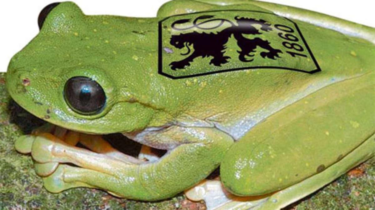 - 741158669-frosch-3Pef