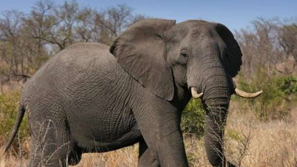 40 jahre artenschutz gewinner verlierer tiere for Seltene zierfische