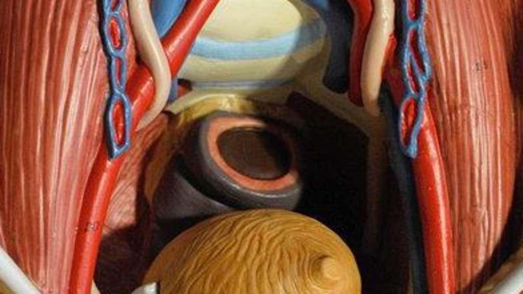 Prostata: Wissenswertes zu dem Drüsenorgan - Wozu hat Mann