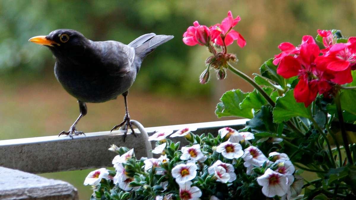 Rechte Auf Dem Balkon Vom Blumenkasten Bis Zur