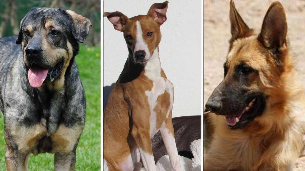 Diese Hunde Auf Dem Sonnenhof Hoffen Auf Ein Neues Zuhause Tiere