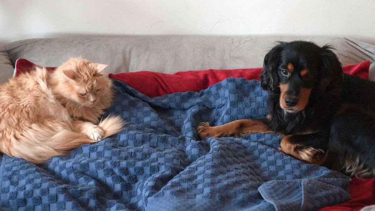 gerichtsurteil zwei gro e hunde in mietwohnung erlaubt wohnen. Black Bedroom Furniture Sets. Home Design Ideas