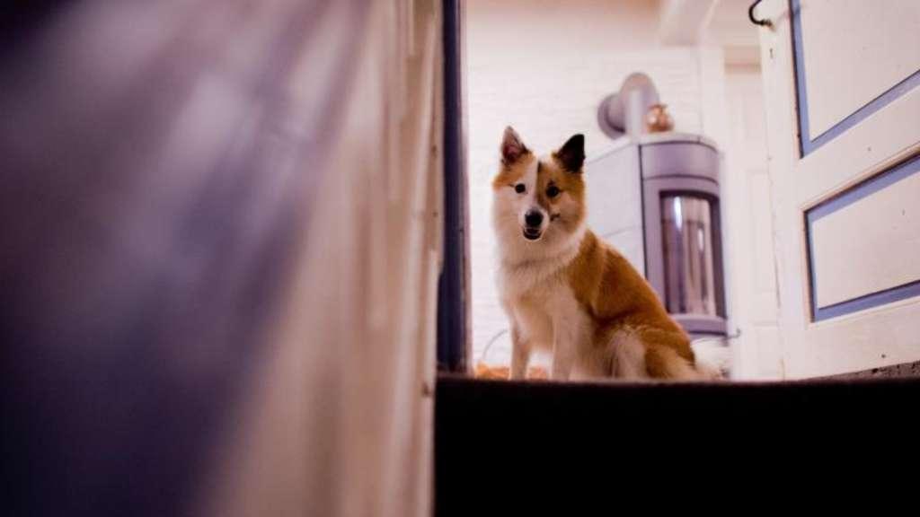 amtsgericht entscheidet ber schicksal von hund toby welt. Black Bedroom Furniture Sets. Home Design Ideas