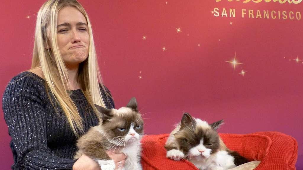 inter  star grumpy cat macht geschichte multimedia