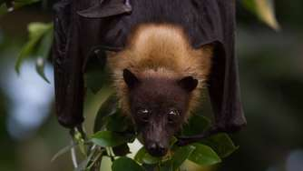 Batnight: Fledermaus-Wochenende in Hellabrunn