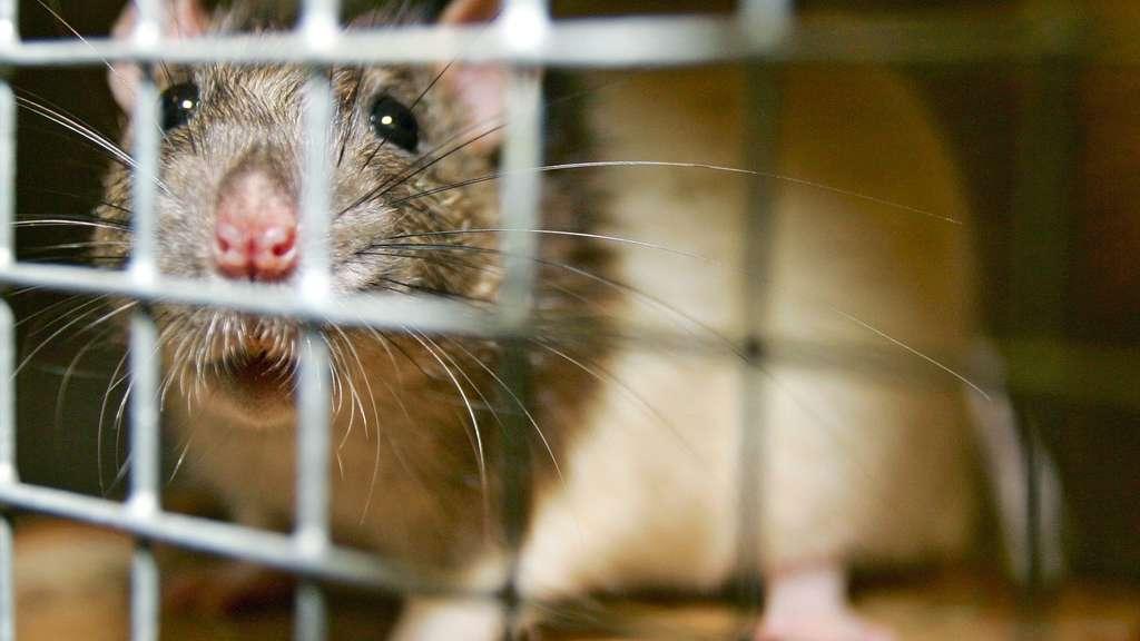 Deutschland: Transport mit mehr als 7.000 Tieren gestoppt