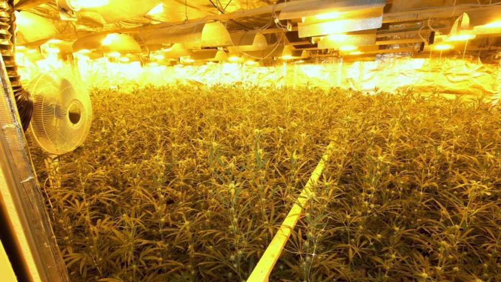 Bremer Polizei findet riesige Drogen-Plantage