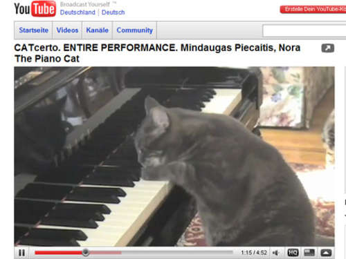 Video des Tages: The Piano Cat and Orchestra