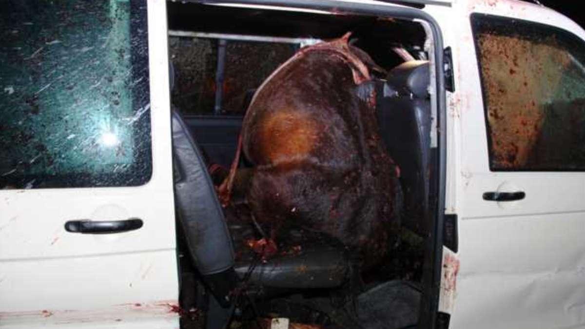 Unfall Mit Pferd Gestern