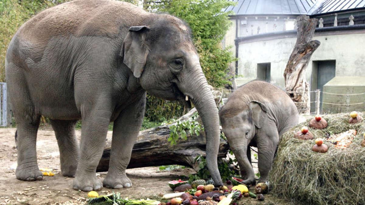 Elefant Ludwig
