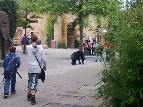 Affen-Alarm im Zoo Hannover