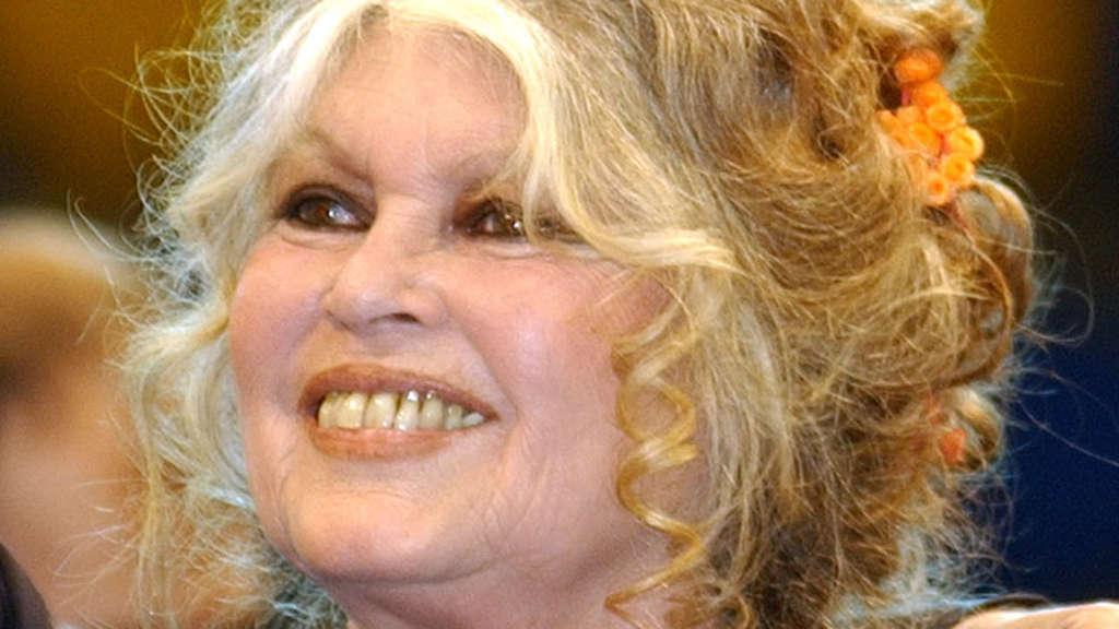 Brigitte Probeabo brigitte bardot weint vor freude katze zurück