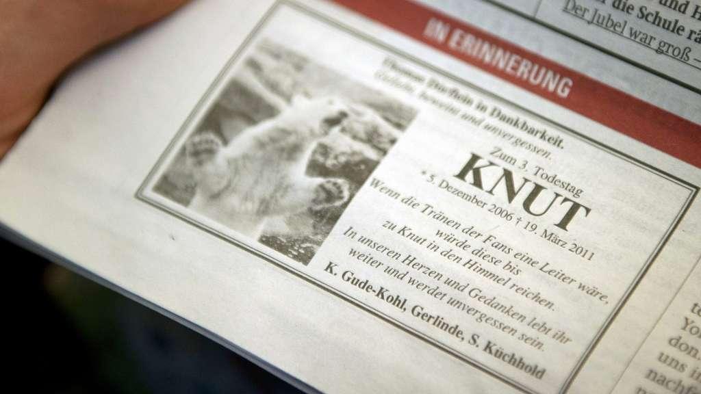 Eisbär Knut: Rührende Traueranzeige in Zeitung   Welt