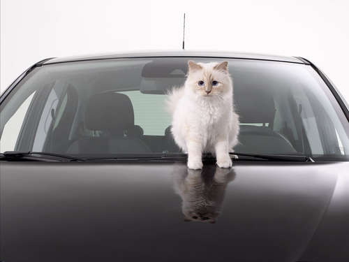 Choupette Lagerfeld beim Opel Corsa Foto-Shooting