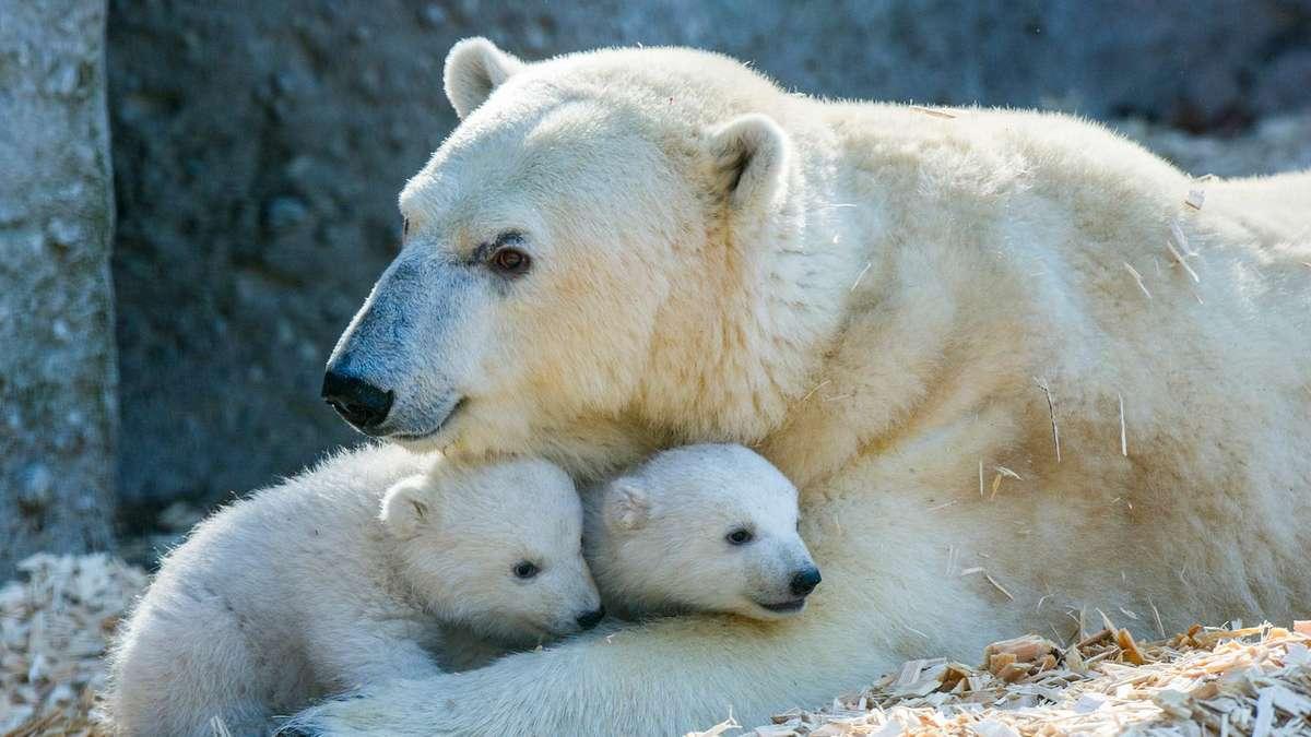 Eisbären Nürnberg