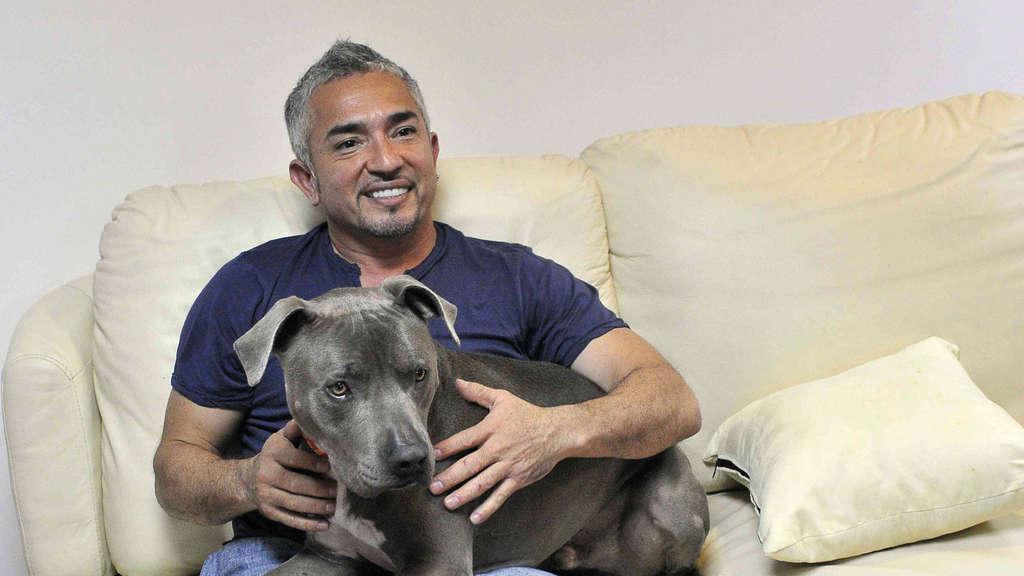 Hundeprofi Cesar Tot