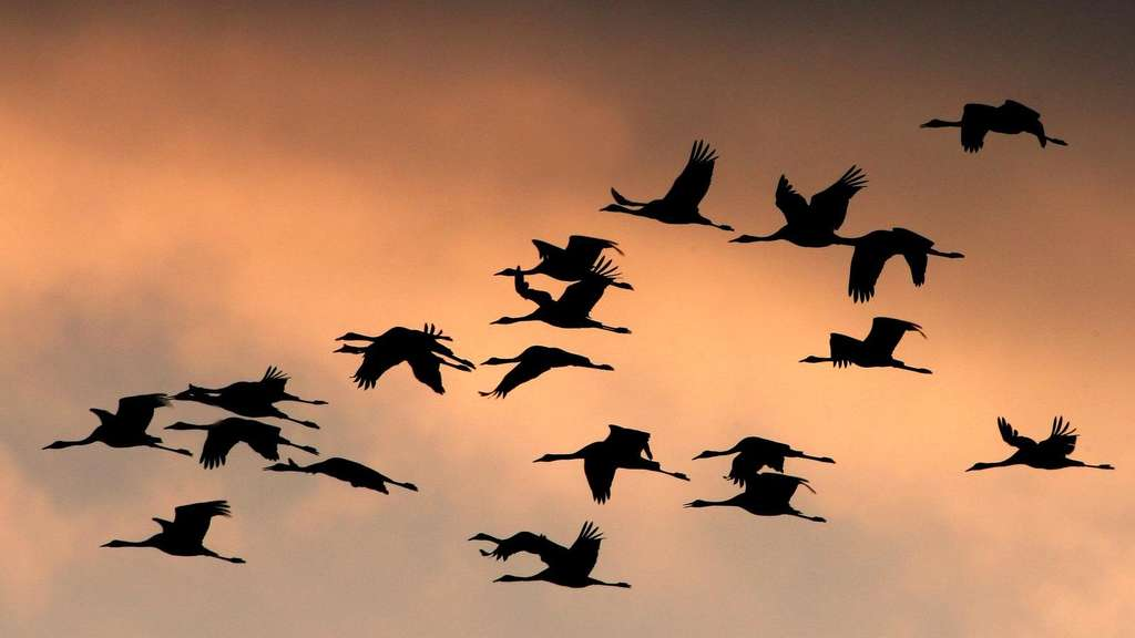online store 3924f 78eba Die Geheimnisse der Zugvögel | Tiere