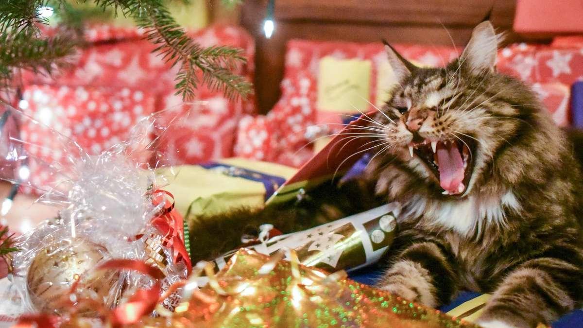 experte tiere sind keine weihnachtsgeschenke tiere. Black Bedroom Furniture Sets. Home Design Ideas