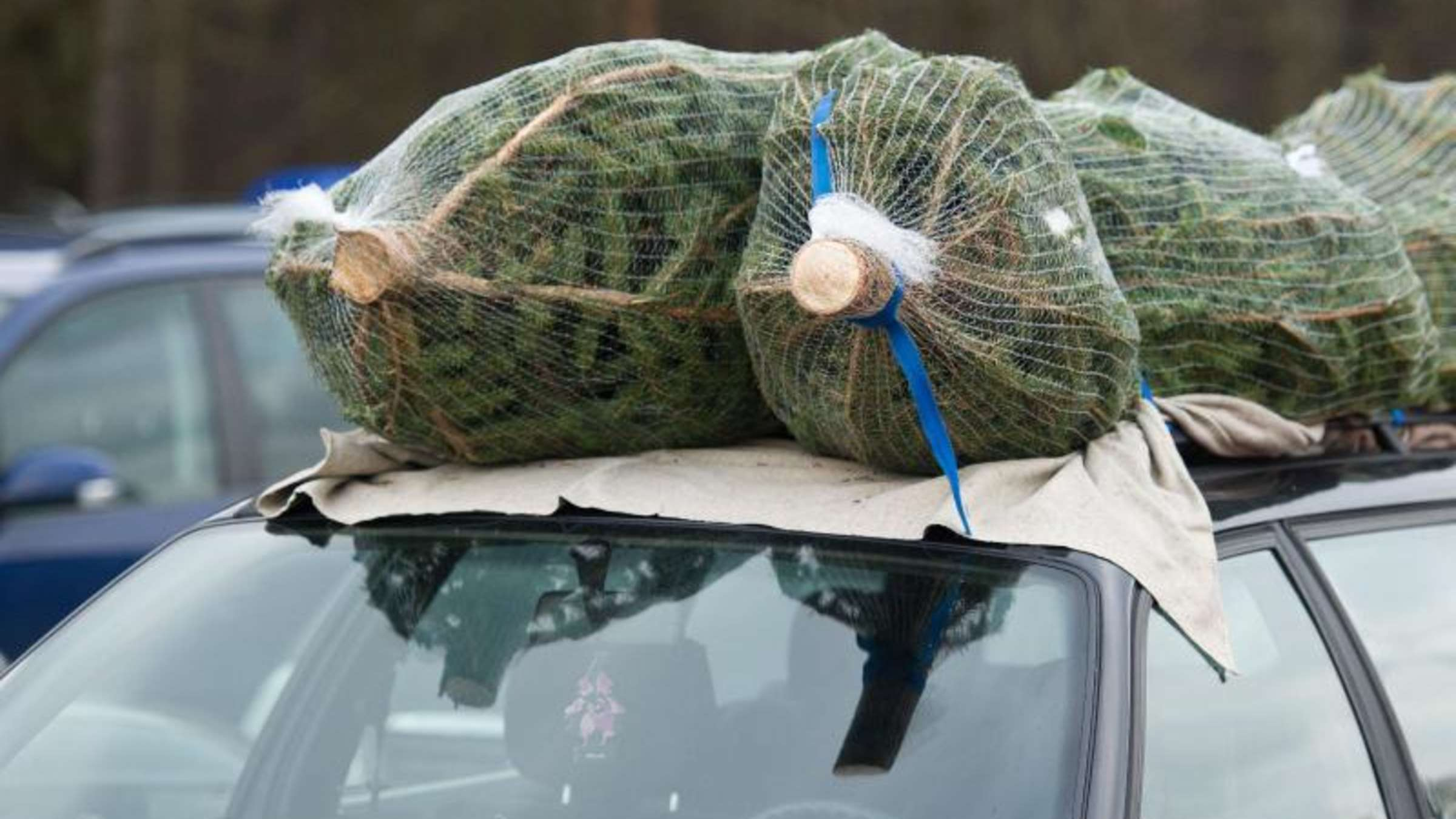 Weihnachtsbaume Nur Mit Spanngurt Aufs Autodach Auto