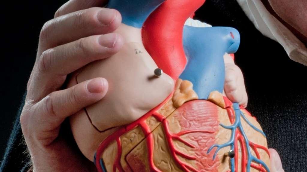 Das Herz: Top-Ärzte erklären ihre besten Therapien | Gesundheit