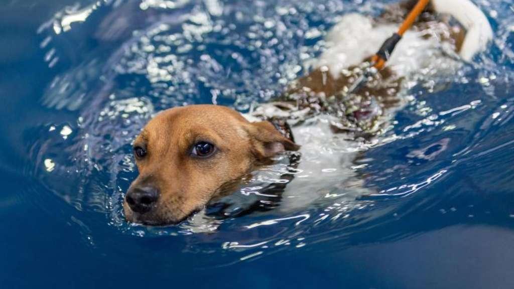 Hundeschwimmbad München