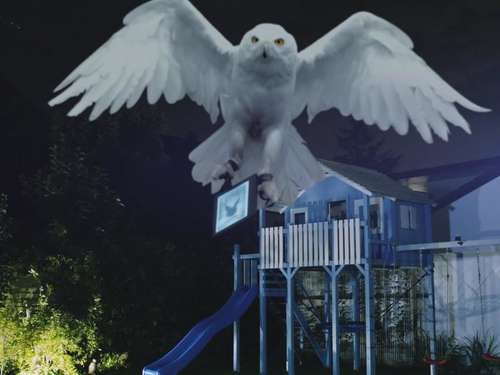 "Eule ""Hedwig"" aus Bad Tölz bringt neuen Harry Potter - Video"