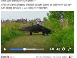 Gigantischer Alligator in den USA gesichtet