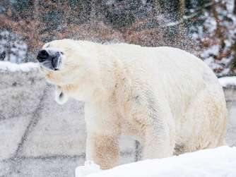Winter im Tierpark Hellabrunn