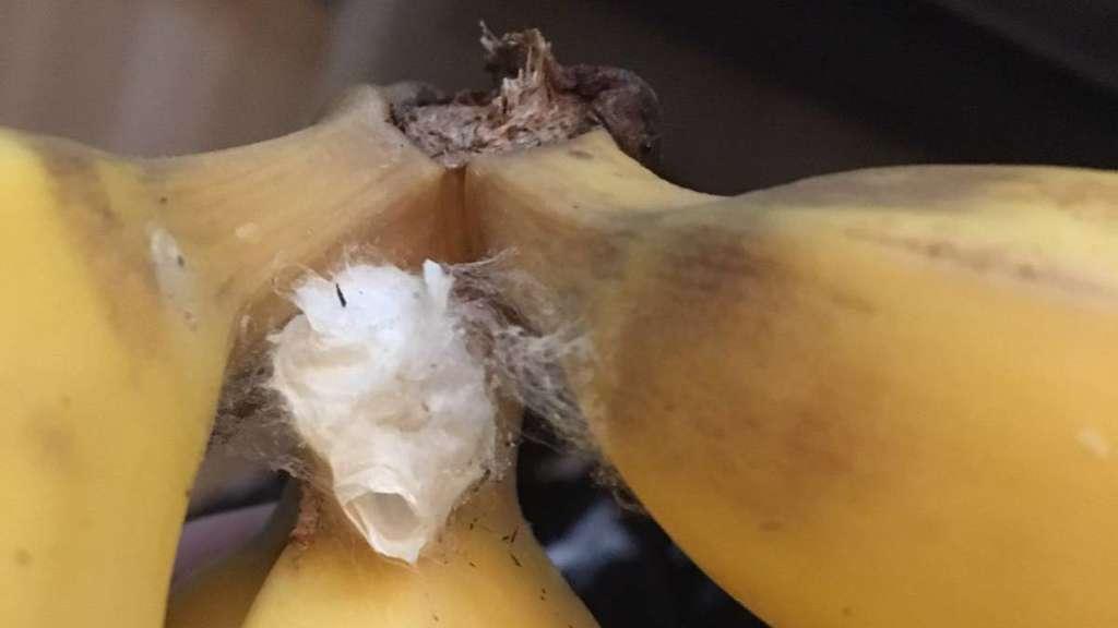 nach einkauf bei aldi familie fl chtet vor giftiger bananenspinne bayern. Black Bedroom Furniture Sets. Home Design Ideas