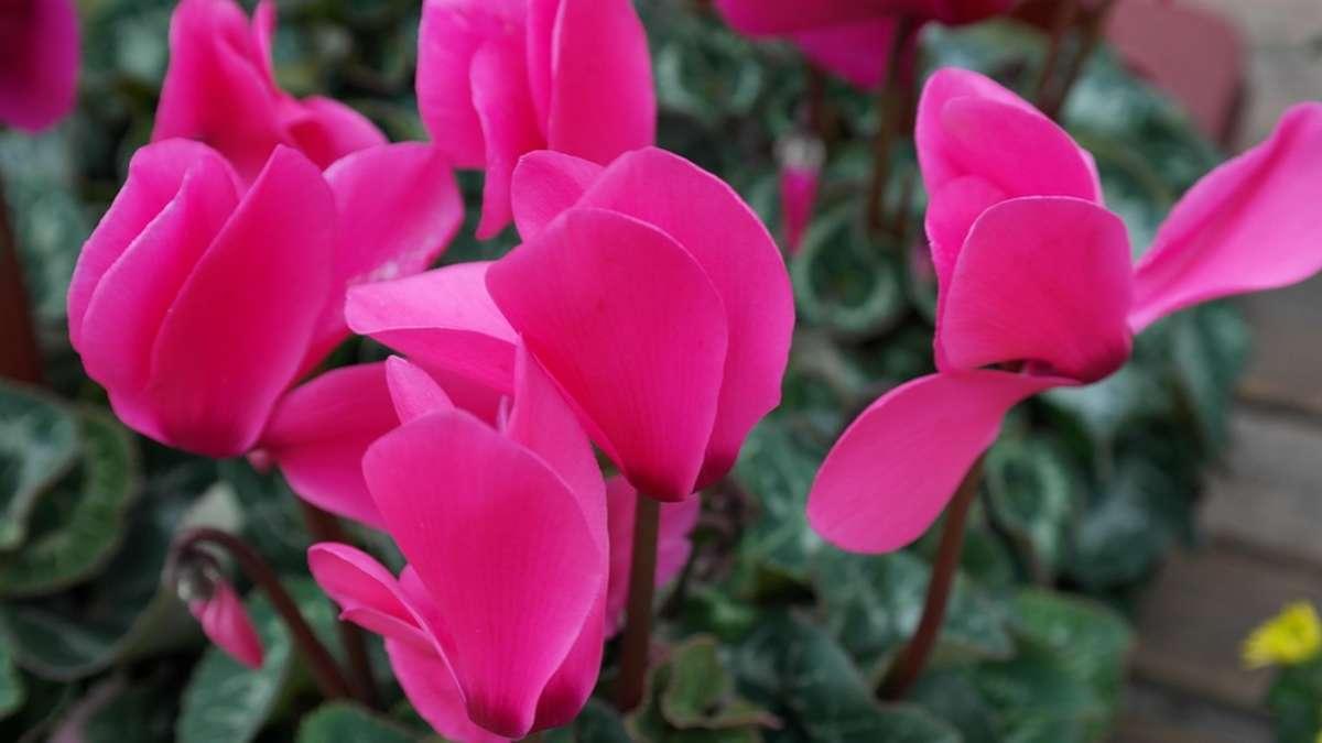Vorsicht diese zimmerpflanzen sind f r kinder giftig wohnen - Zimmerpflanzen giftig ...