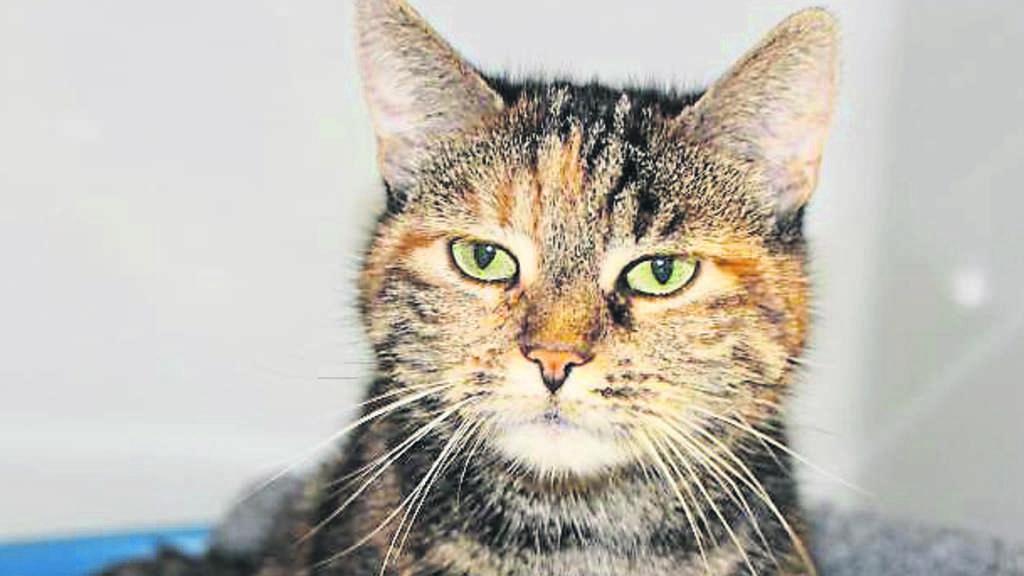 Katze Vor Dem Fernseher Bild: Frau Wirft Katze Aus Dem Fenster
