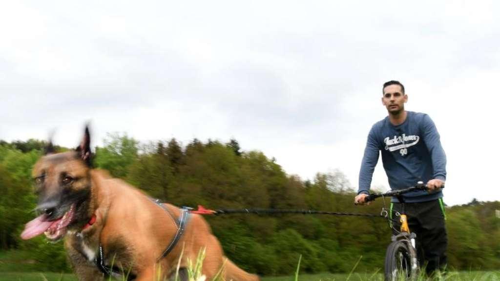 Dogscooting Wenn Der Hund Das Herrchen Zieht Stars